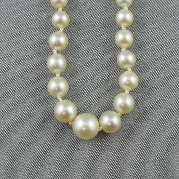 Collier Perles Akoya, 10K blanc, B6012-3